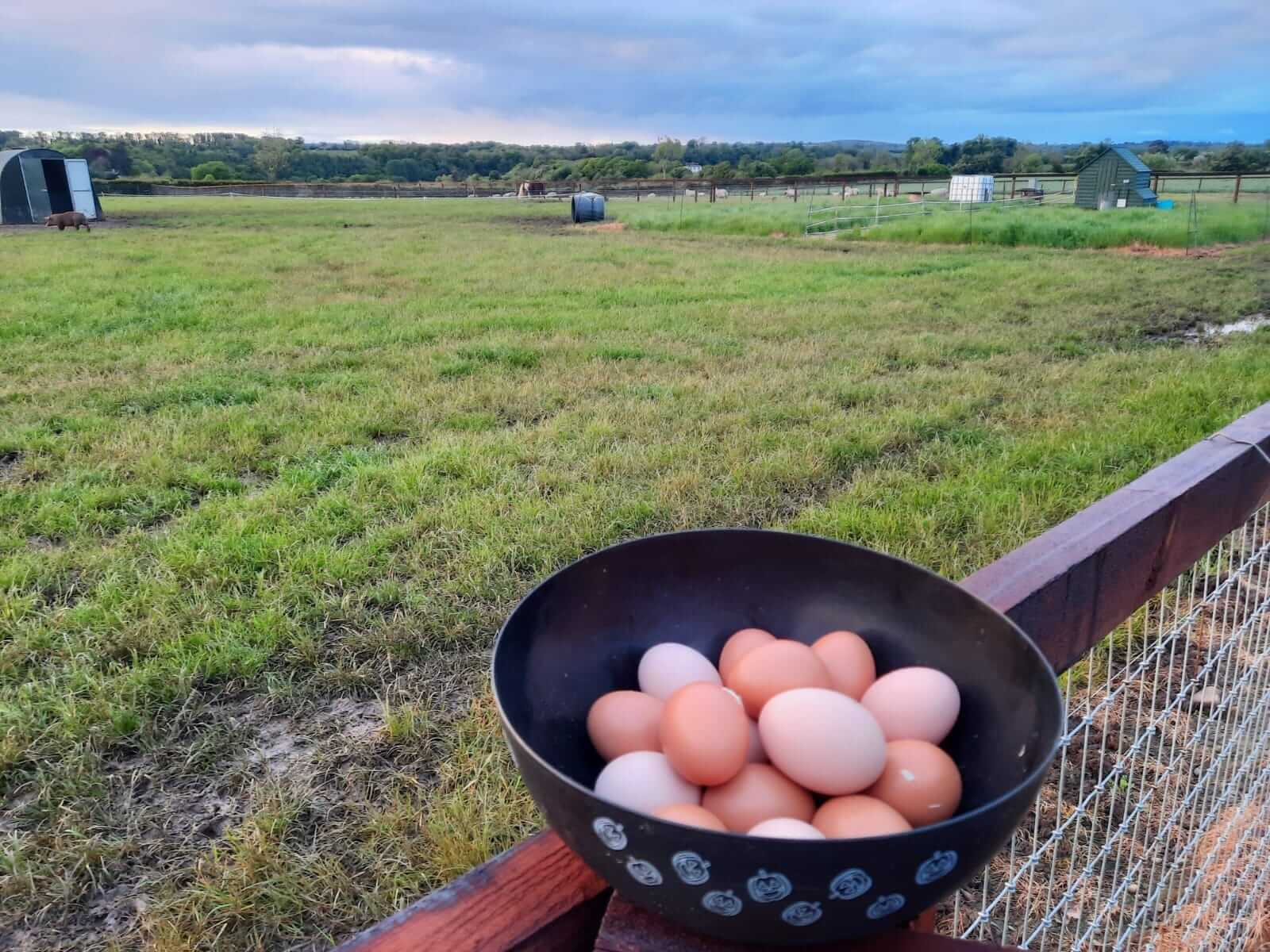 pigspit farm to fork eggs
