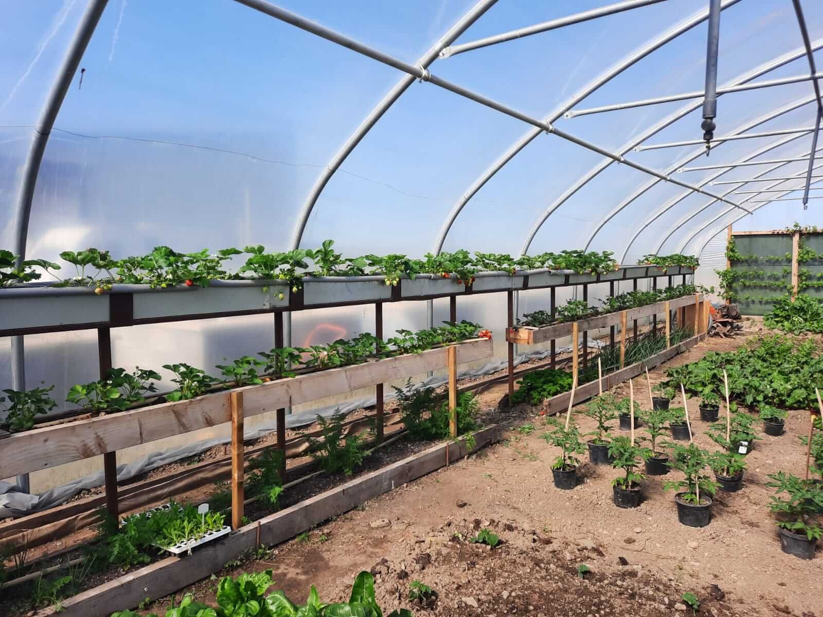 pigspit farm to fork greenhouse
